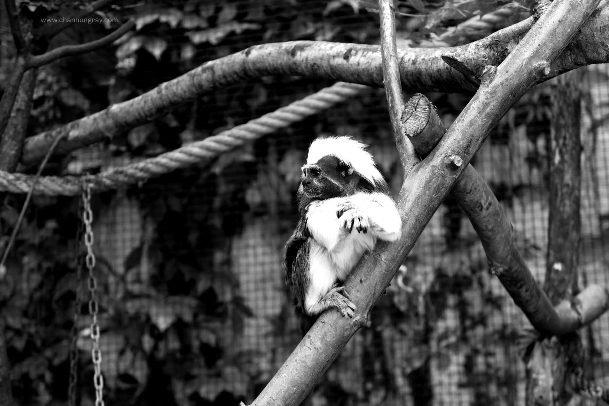 Monkey at ZooParc Du Beauval