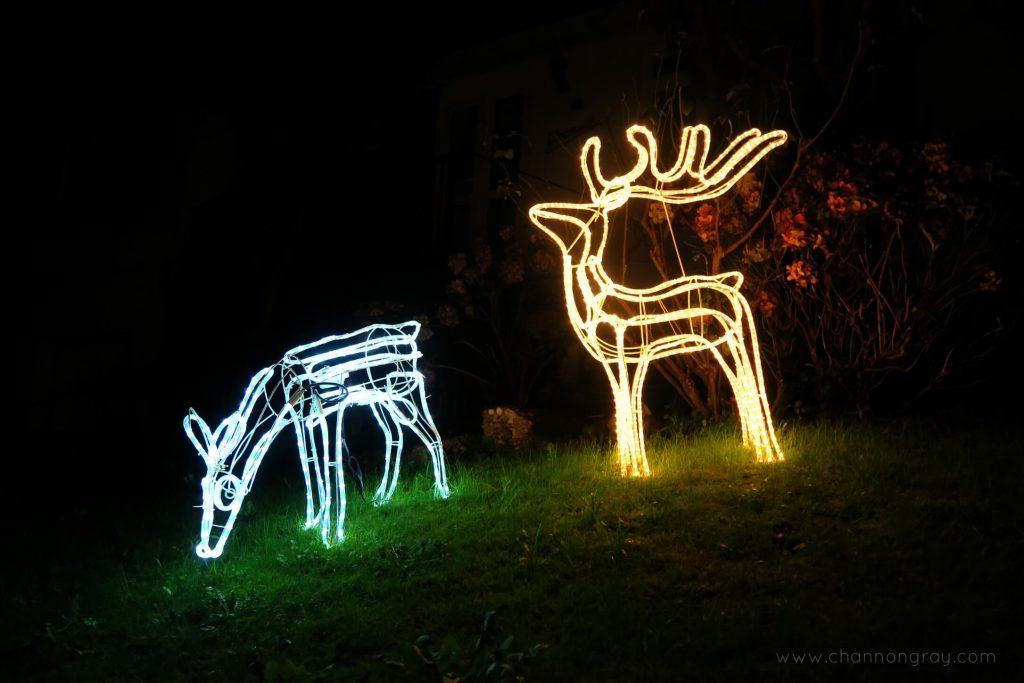 Reindeers 2 Angarrack Cornwall