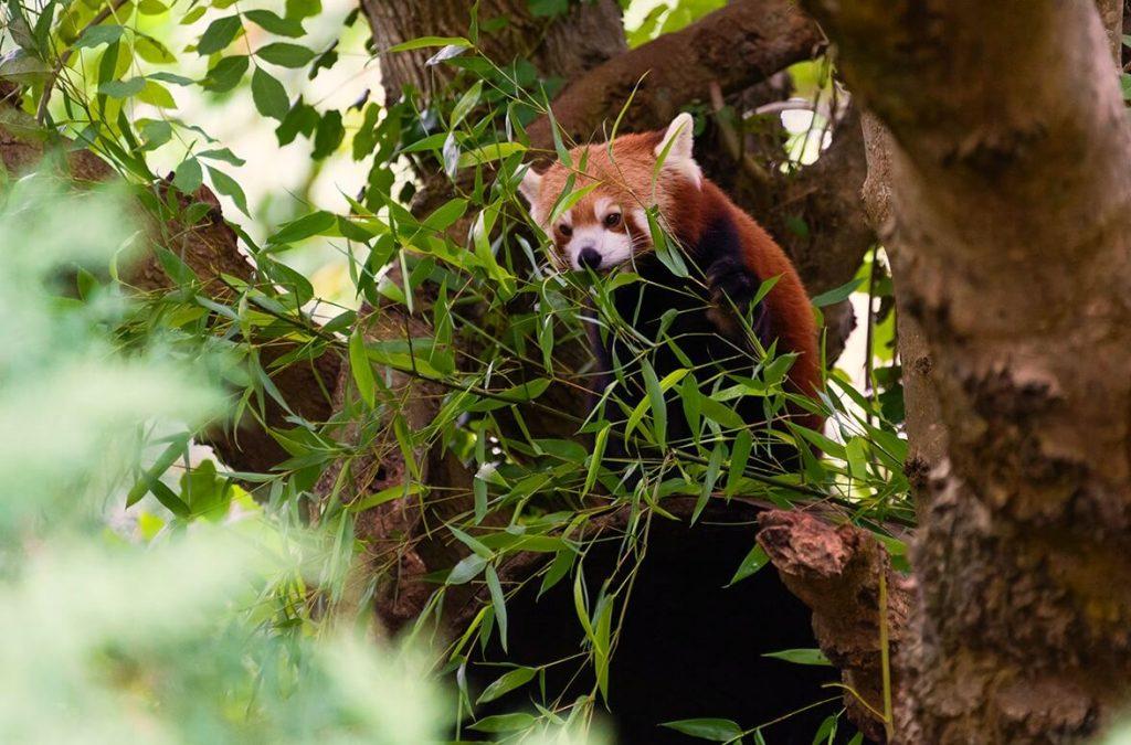 F0916-0063 PR4Photos - Paignton Zoo