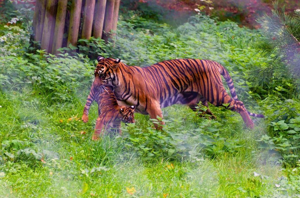 F0916-0066 PR4Photos - Paignton Zoo
