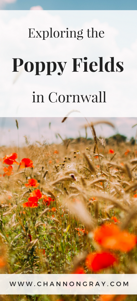 Exploring the Poppy Fields on West Pentire, Newquay, Cornwall. They are created by the National Trust and simply represent the beauty of the English Countryside - www.channongray.com // heythereChannon #Cornwall #NationalTrust